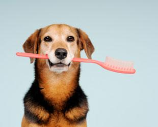 Toothbrush in dog's mouth